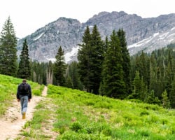 Albion Basin - Caminatas cerca de Salt Lake City
